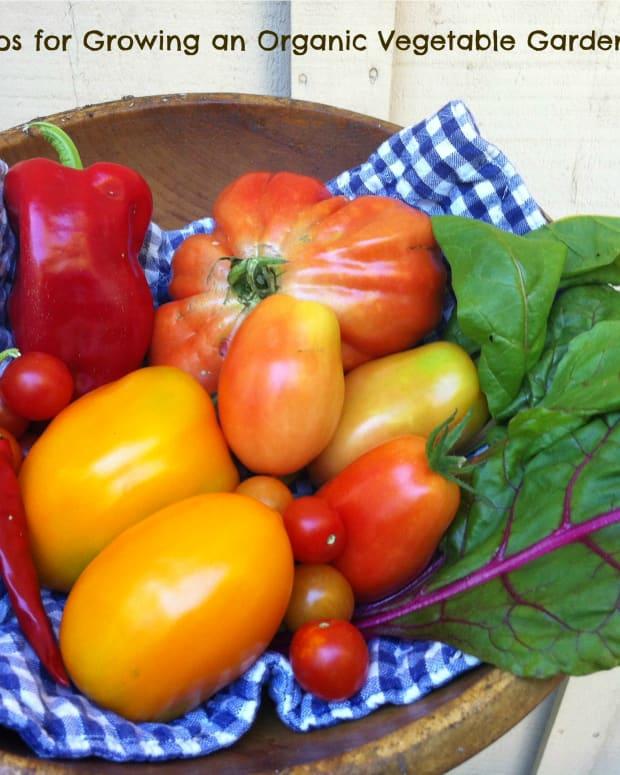 10-tips-for-growing-an-organic-vegetable-garden