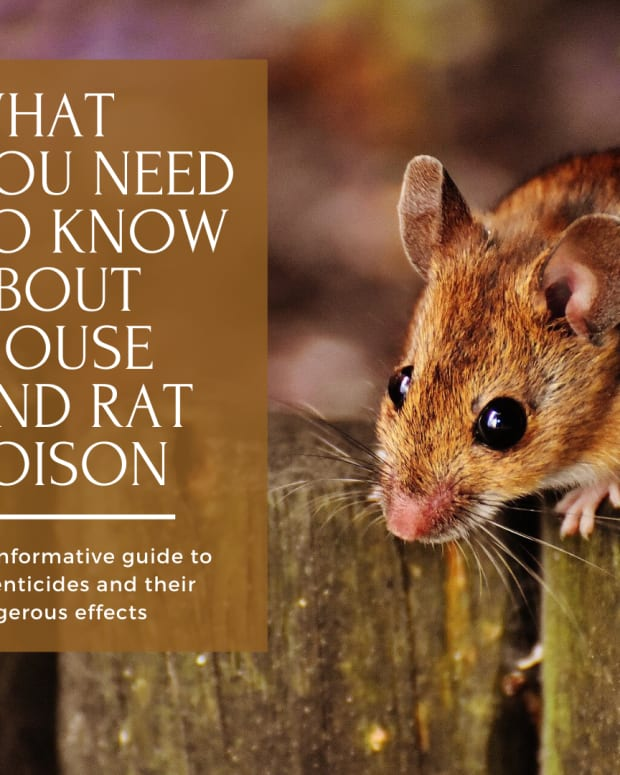 mouse-and-rat-poison-what-theyre-not-telling-us
