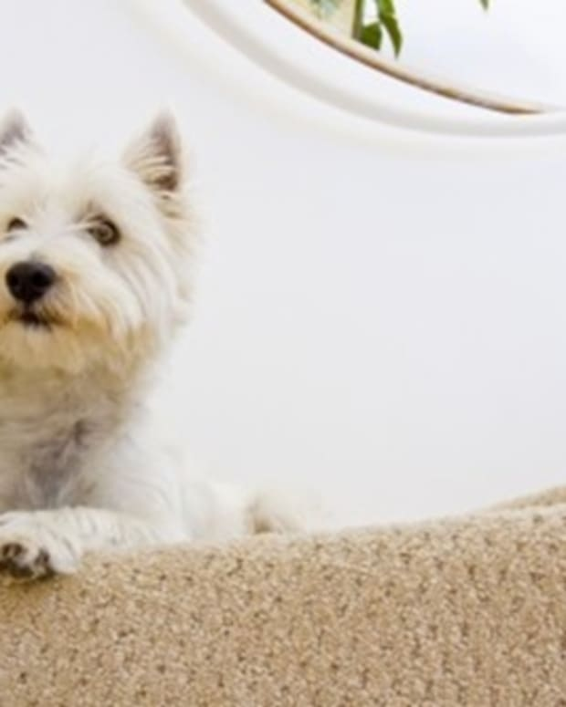 how-to-clean-dog-hairs-off-of-stair-carpeting