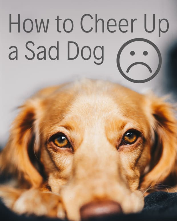 how-to-get-a-dog-to-cheer-up