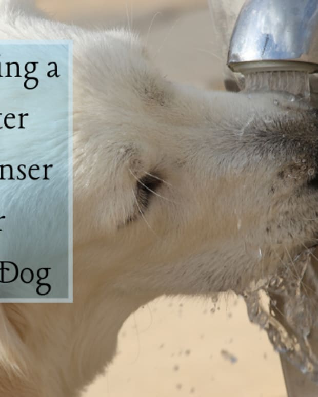 how-to-choose-the-best-dog-water-dispenser