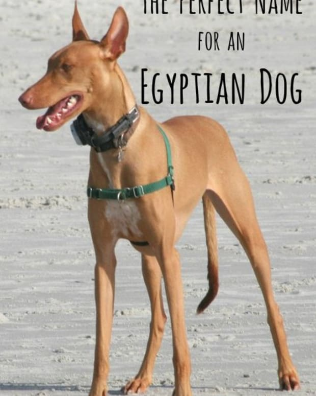 egyptian-dog-names