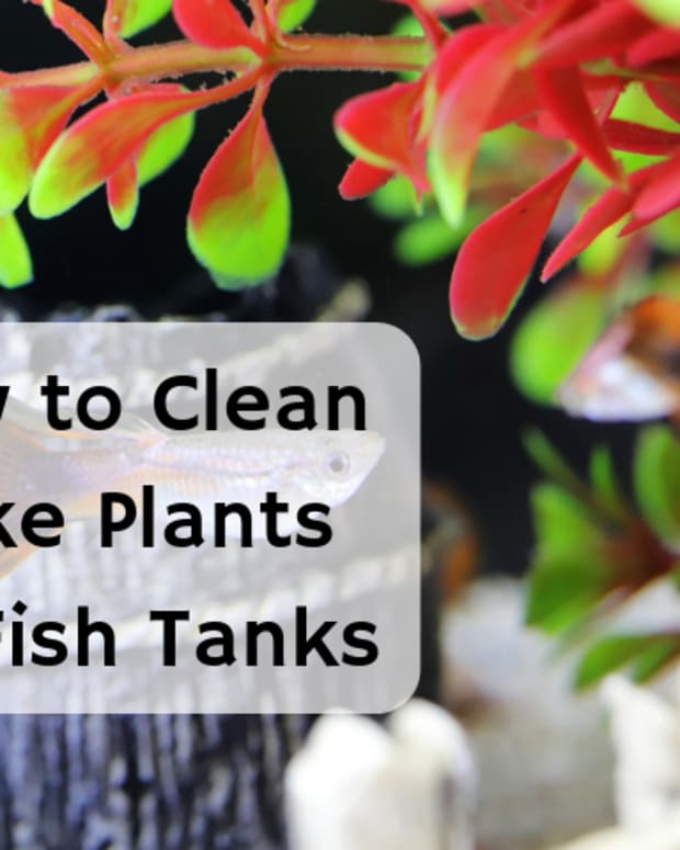 how-to-wash-fish-tank-plants