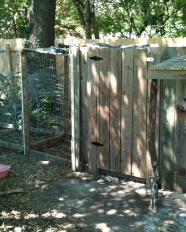 how-to-winterize-a-chicken-coop