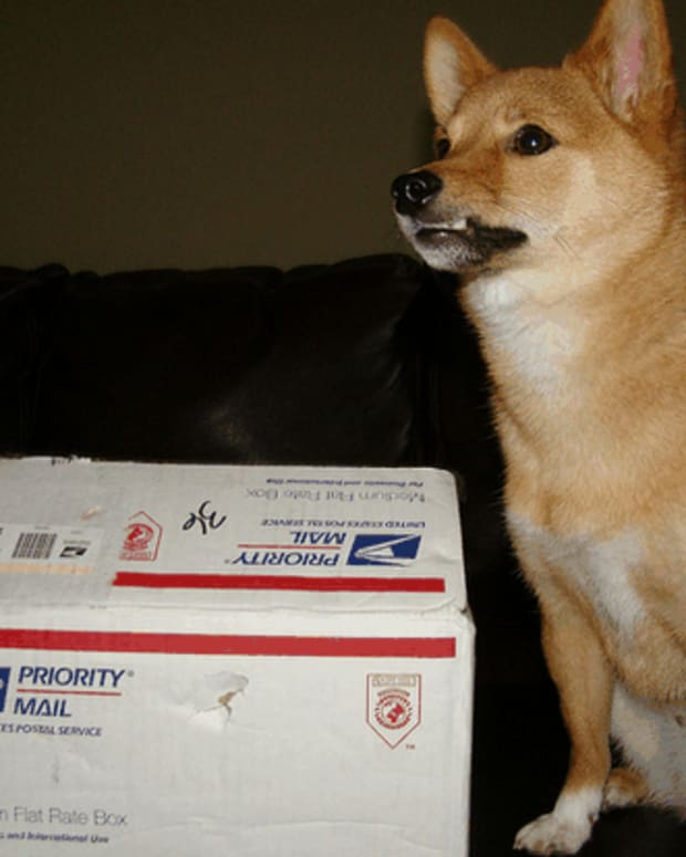 why-do-dogs-hate-the-mail-man