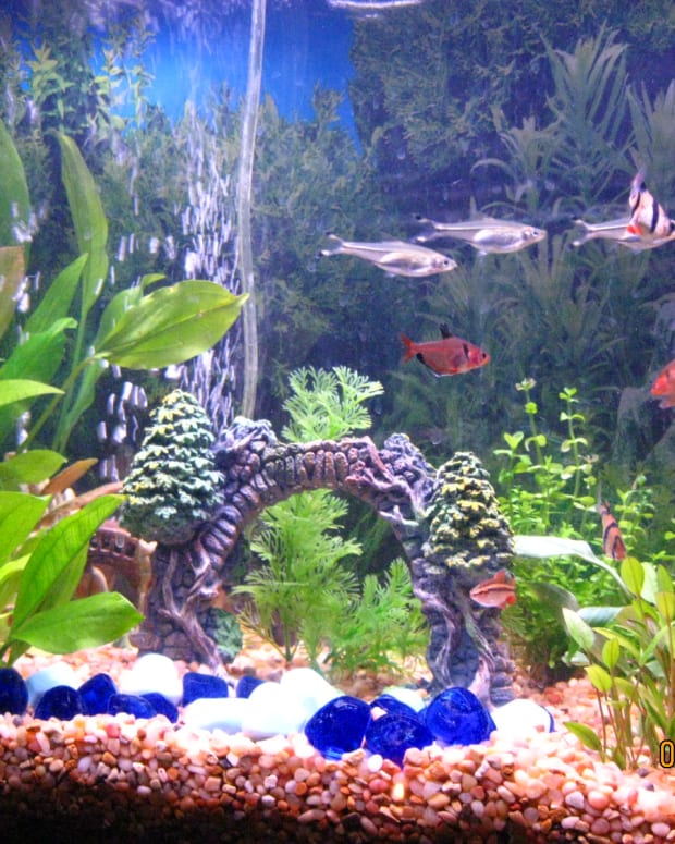 how-to-start-a-fresh-water-aquarium