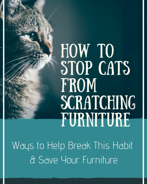how-to-stop-cats-from-scratching-furniture