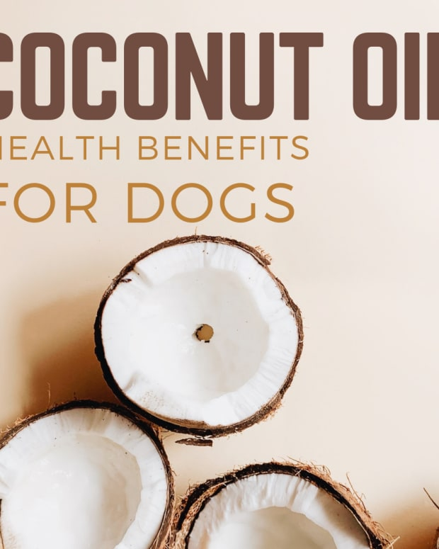 benefits-of-cocunut-oil-for-dogs