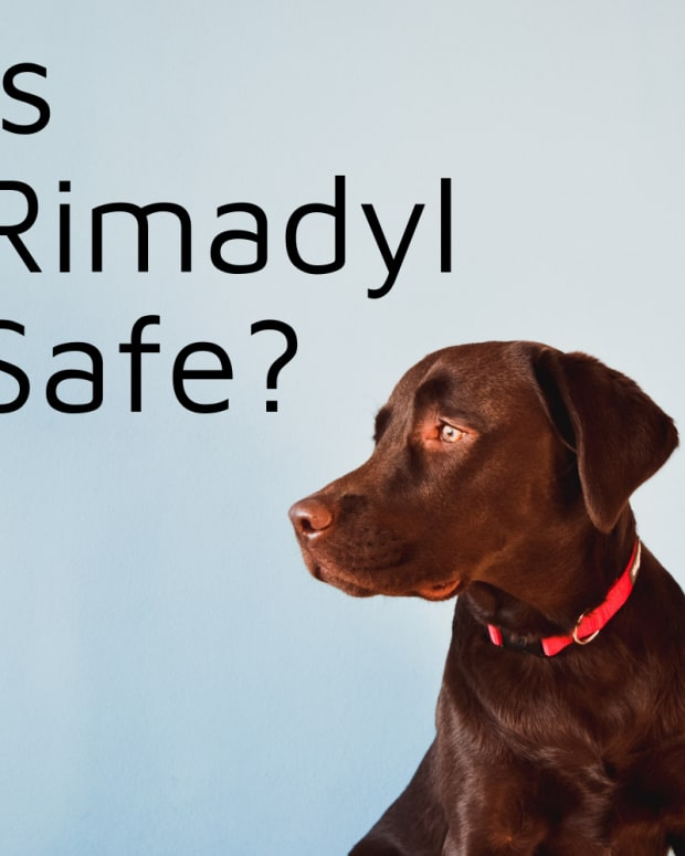 is-rimadyl-safe-for-dogs