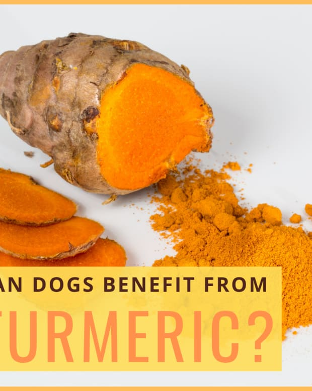 turmeric-for-dogs-benefits-and-risks