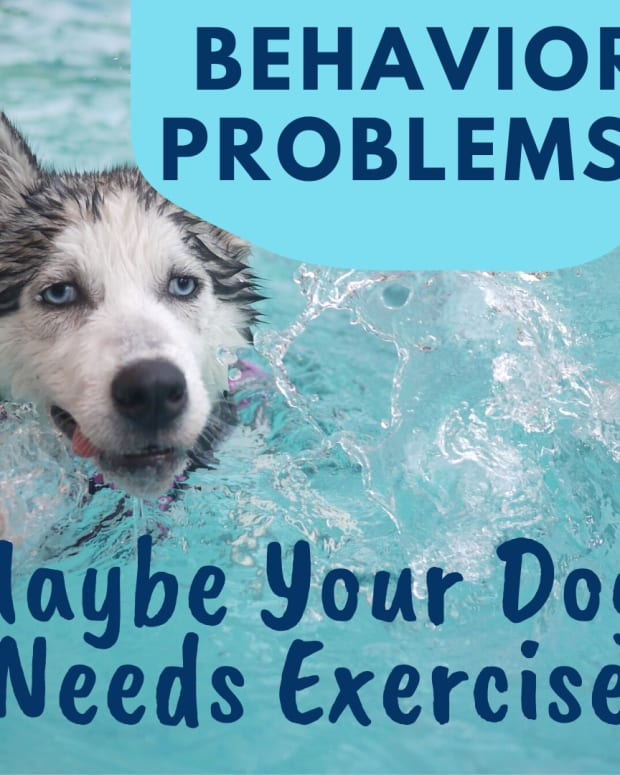 the-many-exercise-benefits-for-dogs-with-behavioral-problems