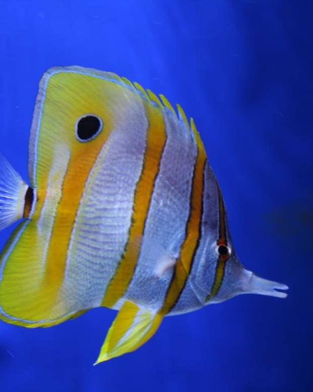 how-many-fish-should-you-put-in-a-fish-tank