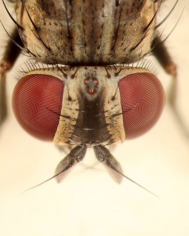here-comes-summer-and-the-dangerous-house-fly