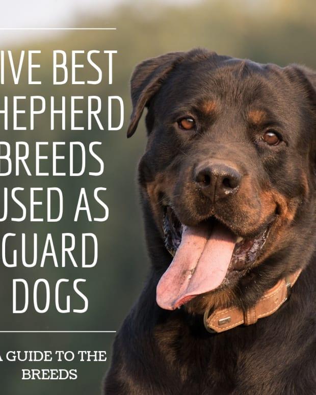 five-best-shepherd-dog-breeds