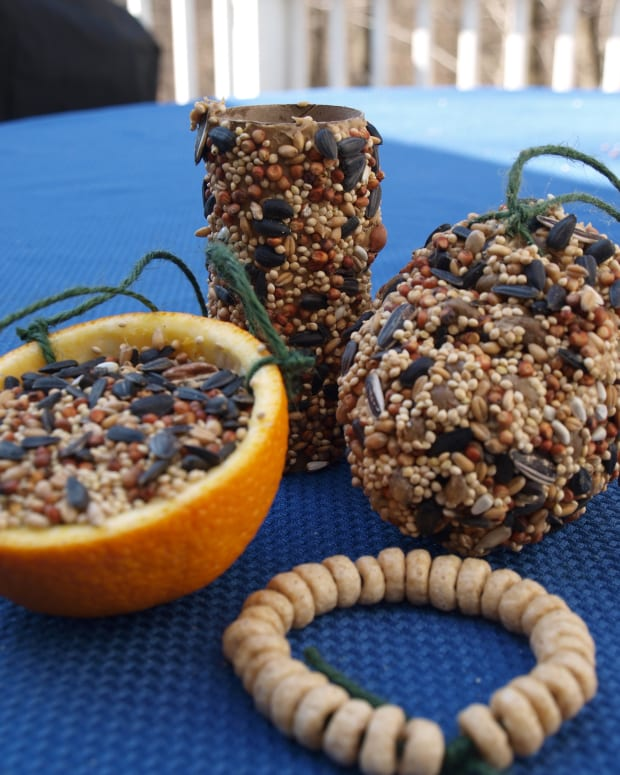easy-biodegradable-bird-feeders
