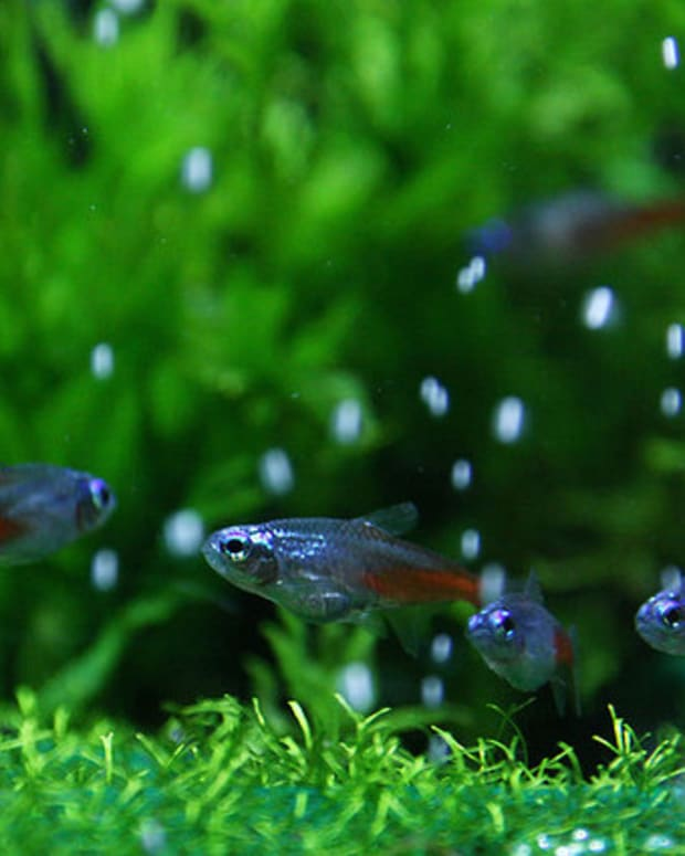 successful-fish-tank-setup-for-beginners