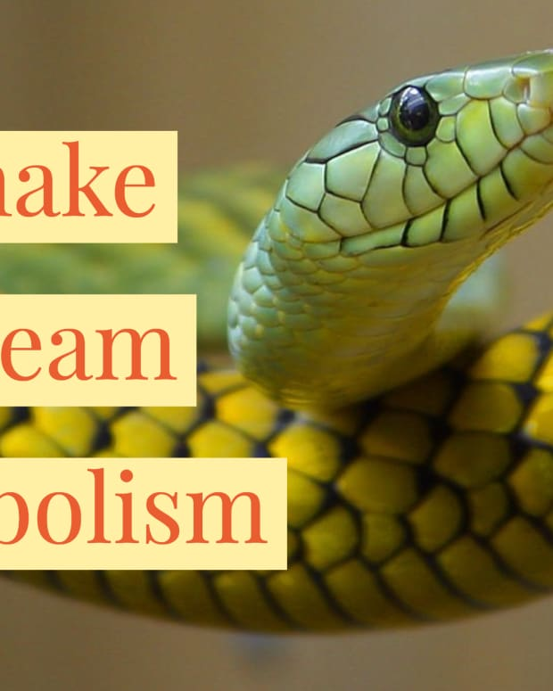 dream-of-snake-meaning-and-symbol-of-snake-in-dreams