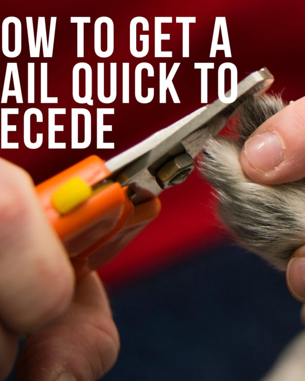 how-to-make-a-dogs-quick-recede