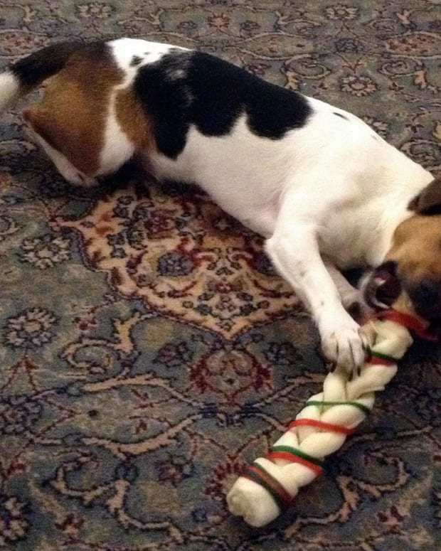 is-rawhide-bad-for-dogs