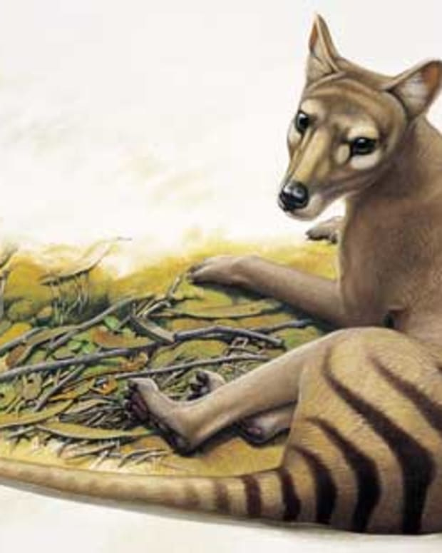 extinct-animals-you-might-see-alive-someday-soon