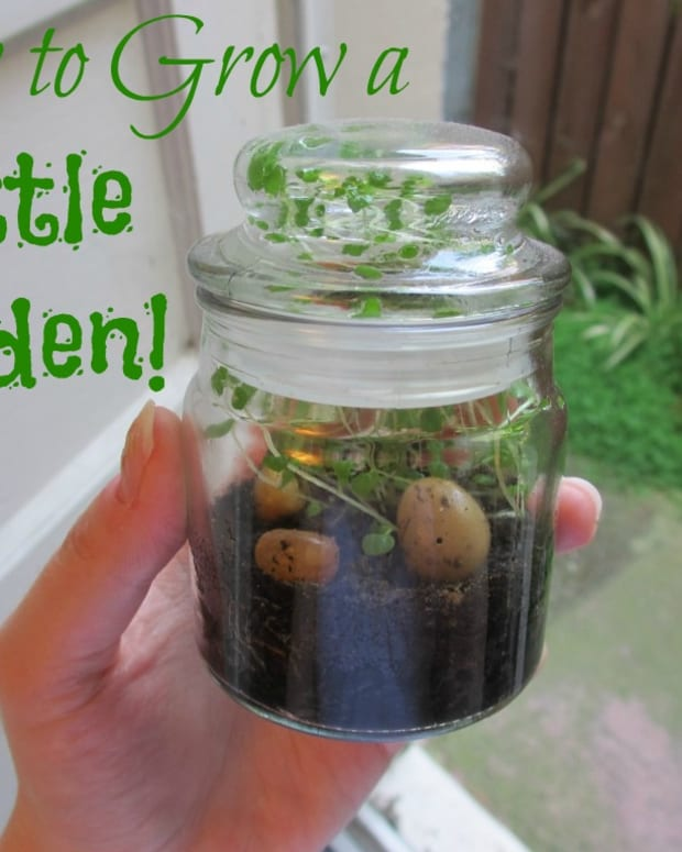 how-to-grow-a-bottle-garden