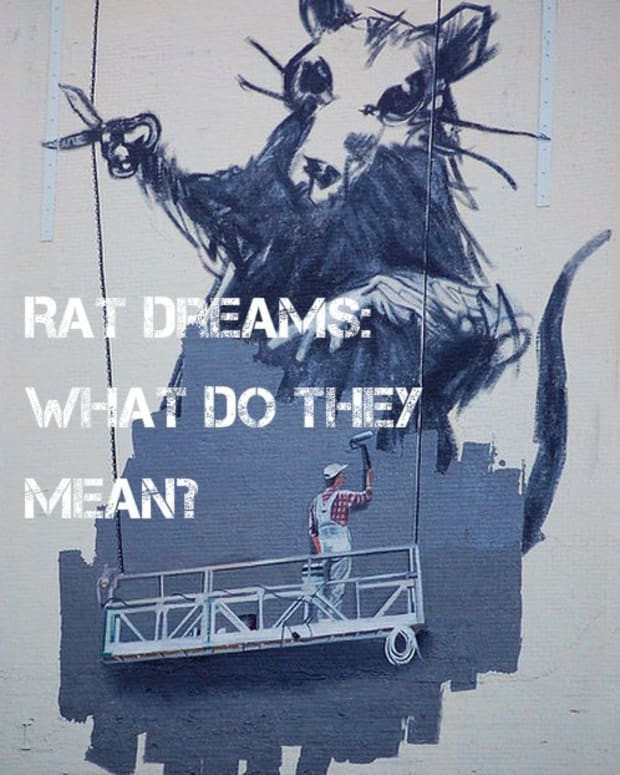 rat-dream-meanings-dreaming-about-rats-rat-dream-interpretations-dream-interpretations