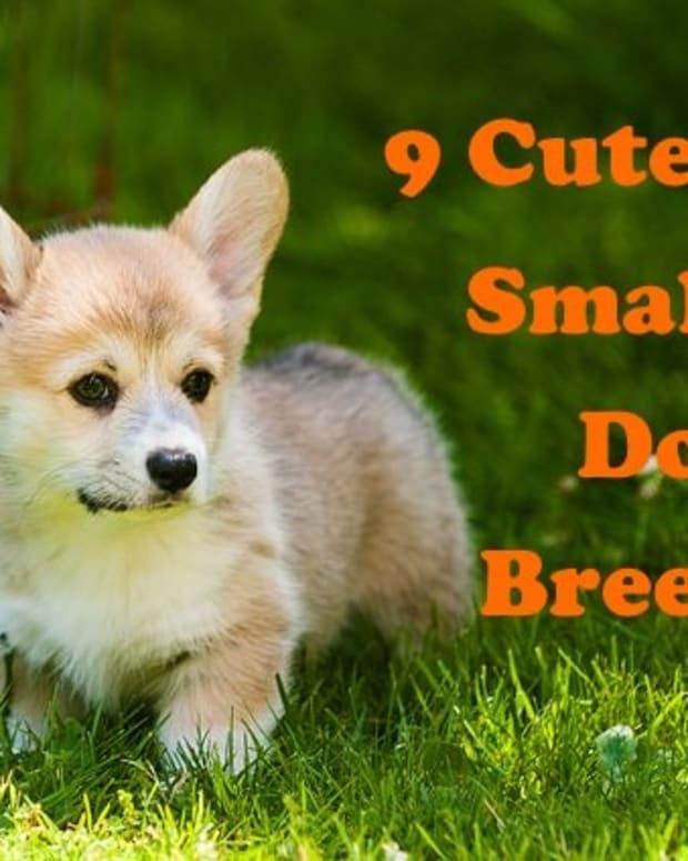 five-cutest-dog-breeds
