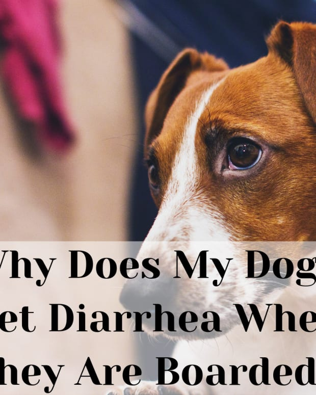 what-causes-diarrhea-in-dogs-when-boarding