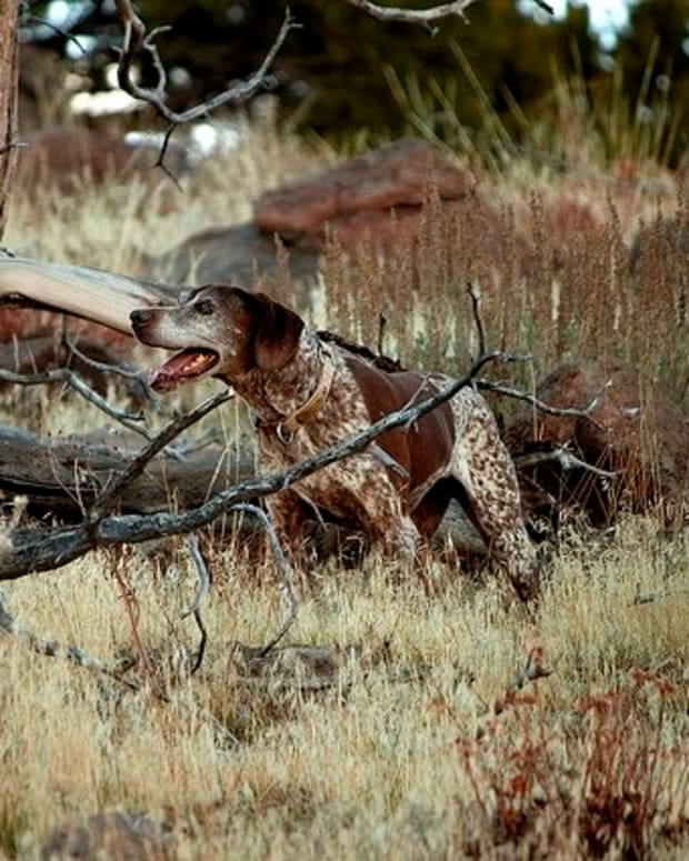 hunting-dog-names