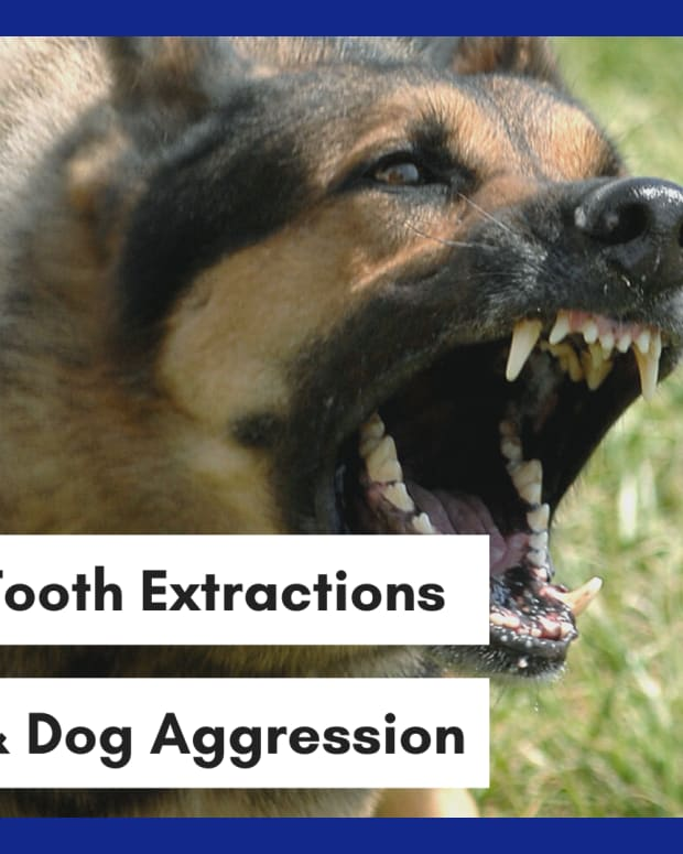aggressive-dog-teeth-removal