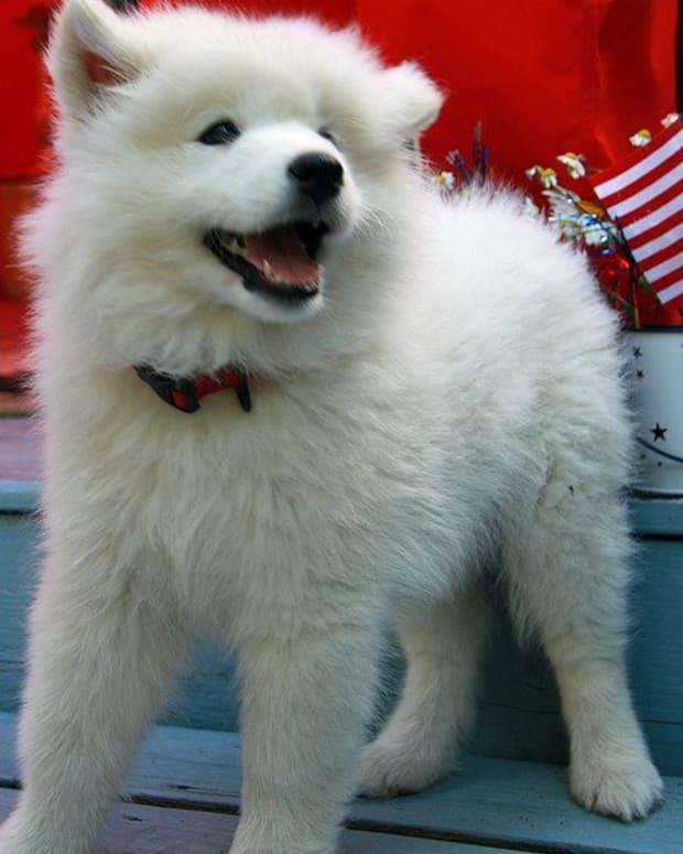 white-dog-names