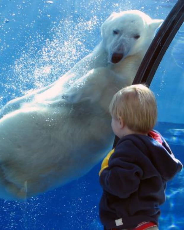 teach-children-about-zoos