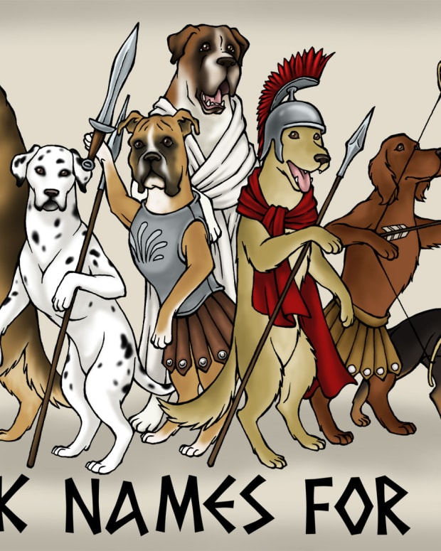 16-greek-names-that-make-cool-names-for-male-dogs