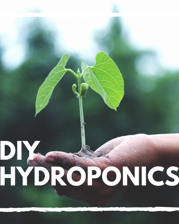 growing-hydroponic-vegetables-in-backyard-tubs-yourself-the-organic-way