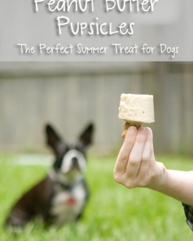 peanut-butter-pupsicles-gourmet-treats-for-dog-recipe-with-pictures