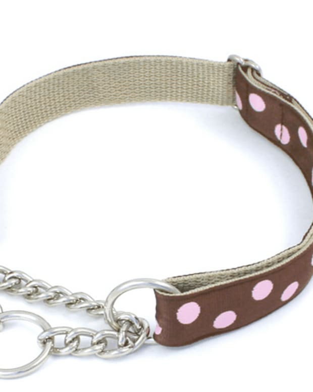 dog-training-tools-the-martingale-collar