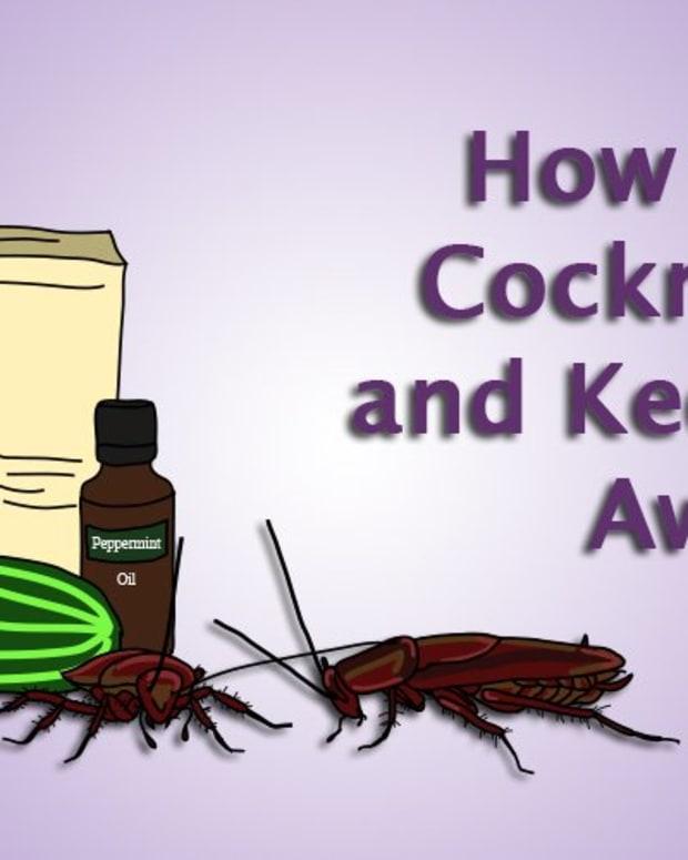kill-cockroach-eggs
