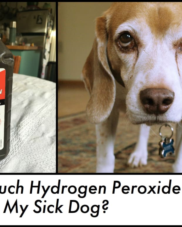 can-you-give-a-dog-too-much-hydrogen-peroxide