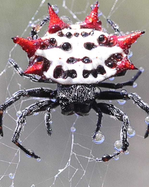 amazing-spiders-strange-interesting-and-scary-facts