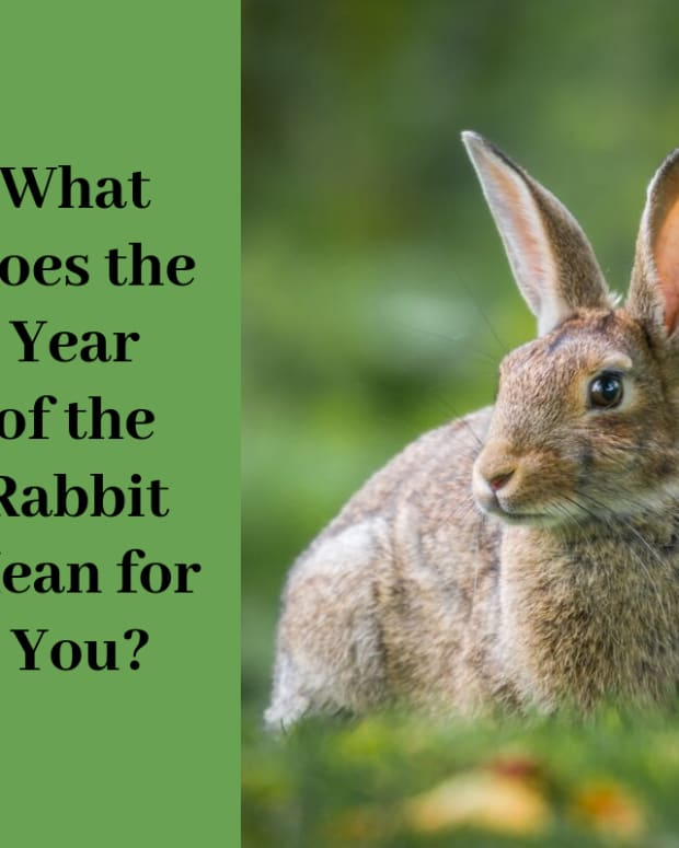 rabbit-year