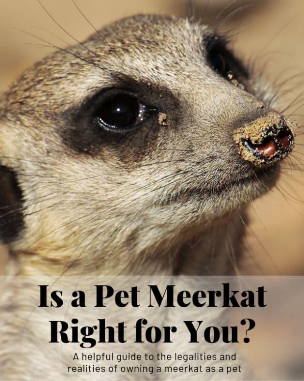 meerkat-pet-care