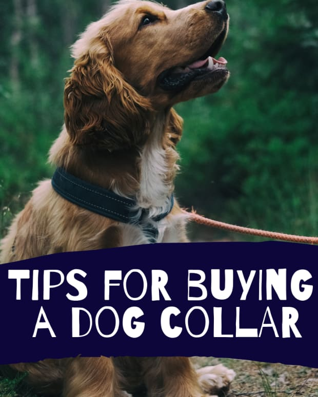 dog-collars-pros-and-cons-of-different-types