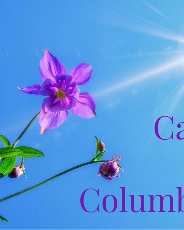 columbine-growing-facts
