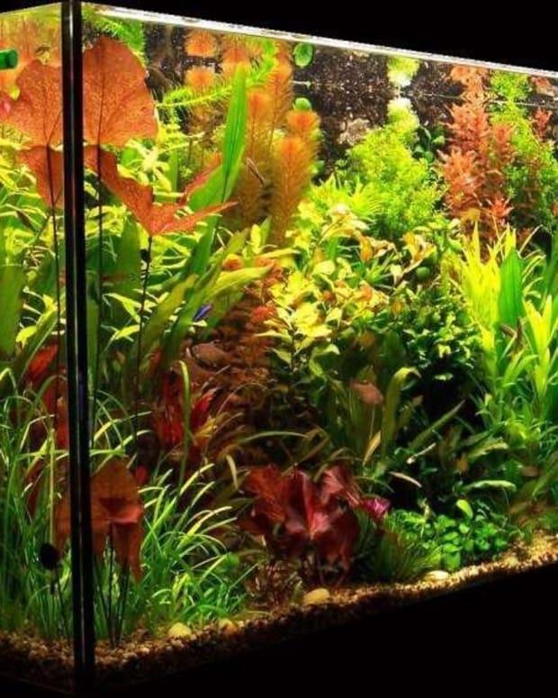 light-in-the-planted-aquarium
