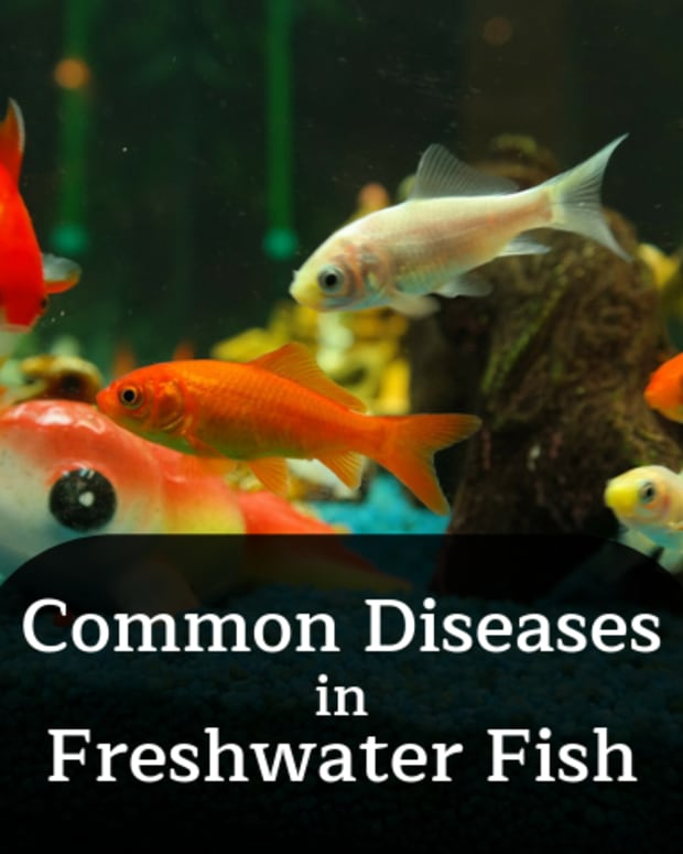 recognizing-common-diseases-in-freshwater-fish