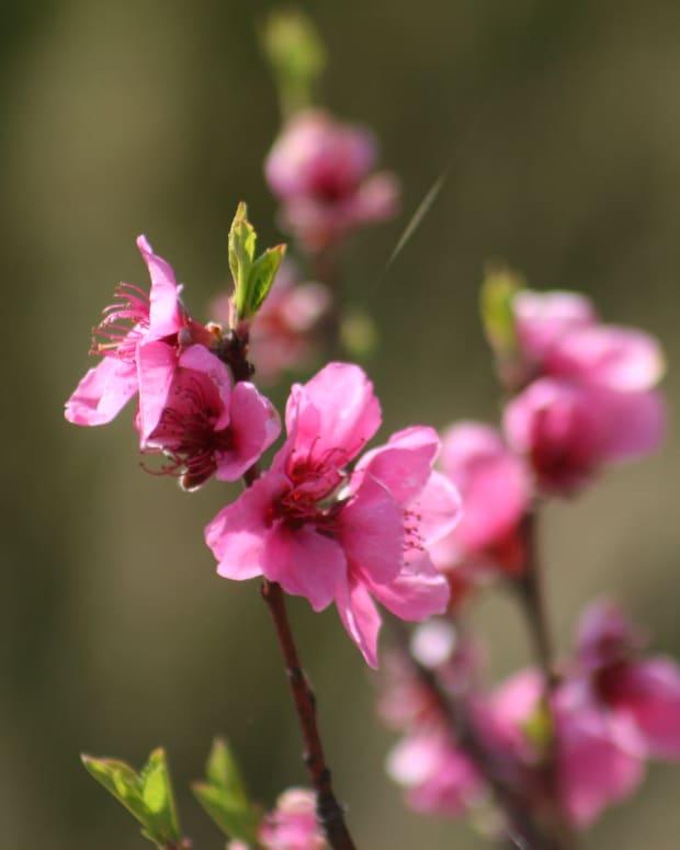 my-organic-garden-in-springtime