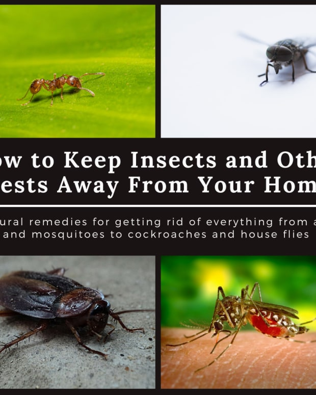 how-to-keep-away-pest-out-of-your-house-home-remedies