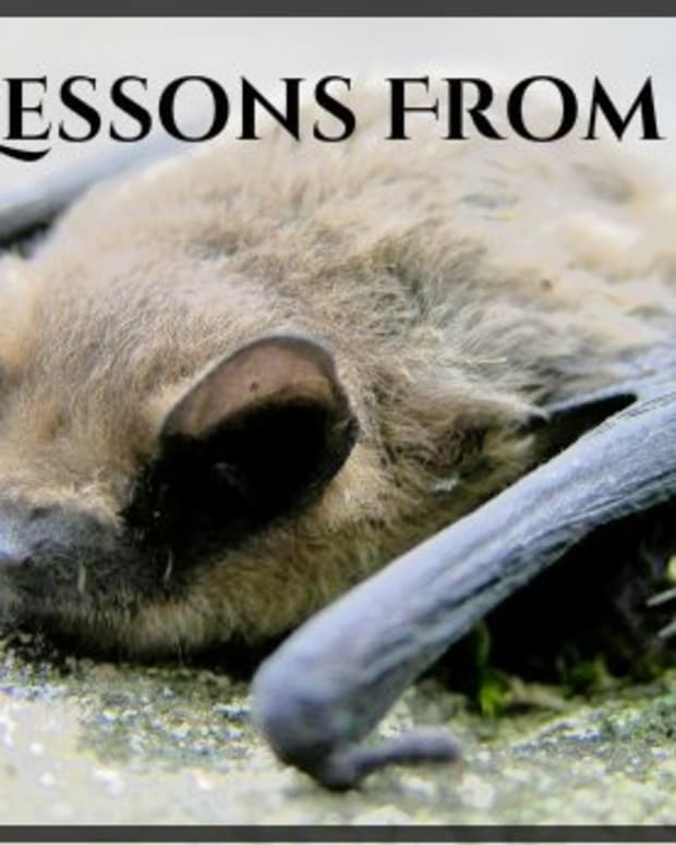 lessons-learned-from-bats-how-to-live-your-best-life