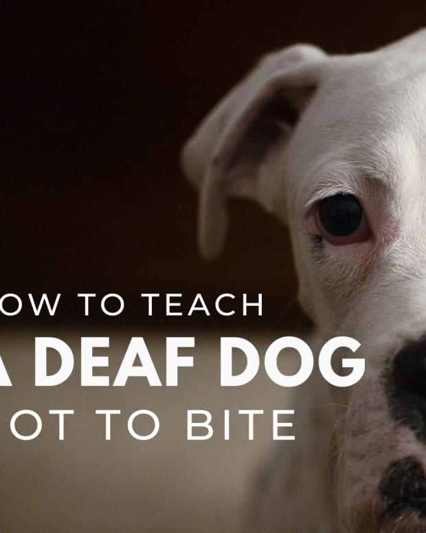 teaching-a-deaf-dog-bite-inhibition