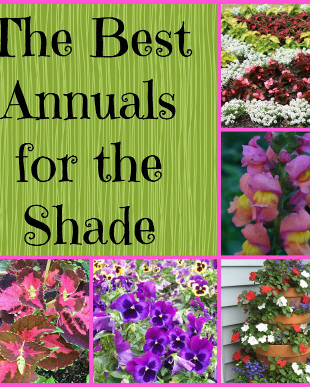 gardening-in-the-shade-plants-for-shady-areas